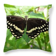 Butterflies Live - 8 Throw Pillow