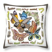 Butterflies Moths Caterpillars Throw Pillow