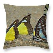 Butterflies Puddling Throw Pillow