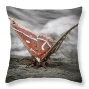 Butterfly 12 Throw Pillow