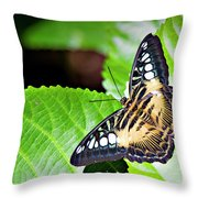 Butterfly 13a Throw Pillow