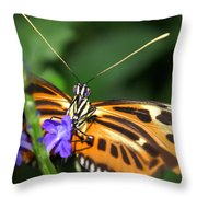 Butterfly 2 Eucides Isabella Throw Pillow