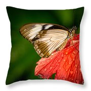Butterfly 24 Throw Pillow