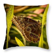 Butterfly 25 Throw Pillow