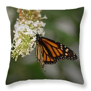 Butterfly #6 Throw Pillow