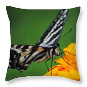 Butterfly Afternoon Throw Pillow