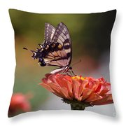 Butterfly And Orange Zinnia Throw Pillow