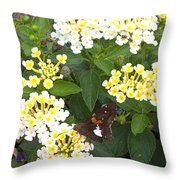 Butterfly And The Spider Throw Pillow
