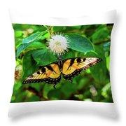 Butterfly Beauty Throw Pillow