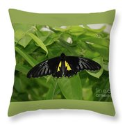 Butterfly Black And Yellow Throw Pillow
