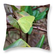 Butterfly Camouflage Throw Pillow