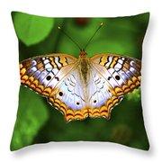Butterfly Closeup Throw Pillow