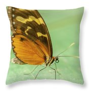 Butterfly Eueides Isabella Throw Pillow