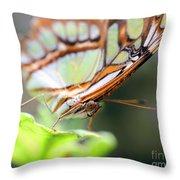 Butterfly Face Throw Pillow