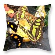 Butterfly Feast  Throw Pillow
