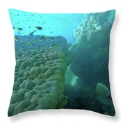 Butterfly Fish  Throw Pillow by Debbie Cundy