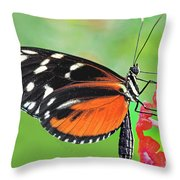 Butterfly  Golden Helicon Throw Pillow