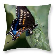 Butterfly Laying Eggs Throw Pillow