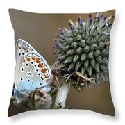 butterfly on a Echinops adenocaulon Throw Pillow