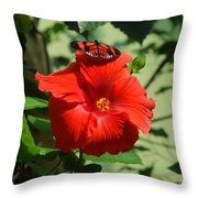 Butterfly On Hibiscus Throw Pillow