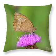 Butterfly On Knapweed Throw Pillow