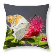 Butterfly On Magenta Flower Throw Pillow