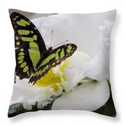 Butterfly On Orchid Throw Pillow