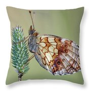 Butterfly On The Grass Throw Pillow