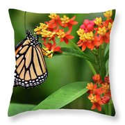 Butterfly Resting On Flower Throw Pillow