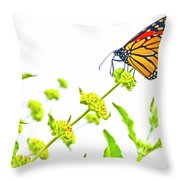 Butterfly Series #10 Throw Pillow