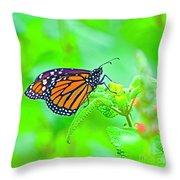Butterfly Series #13 Throw Pillow