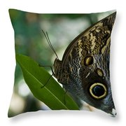 Butterfly Sitting Throw Pillow