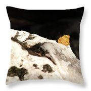 Butterfly Standing On Rock Throw Pillow