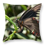 Butterfly Surprises Throw Pillow