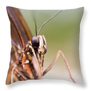 Butterfly Tongue Throw Pillow
