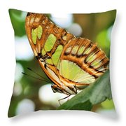 Butterfly Watching Throw Pillow