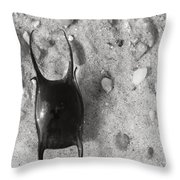 bw1 Throw Pillow