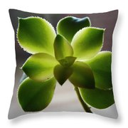 By The Window Pane Throw Pillow
