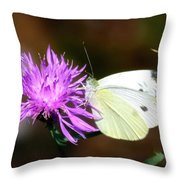 Cabbage Butterflies On Spotted Knapweed Throw Pillow