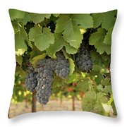 Cabernet Grapes One Throw Pillow