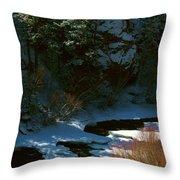 Cache La Poudre Riv M 28 Throw Pillow