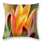 Cacti Elegance Throw Pillow
