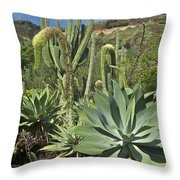 Cacti Of Koko Crater Throw Pillow