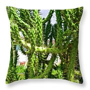 Cactus At Pilgrim Place In Claremont-california  Throw Pillow