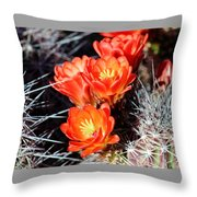 Cactus Bloom 033114j Throw Pillow
