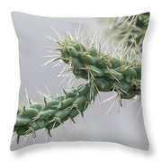 Cactus Branch With Wet White Long Needles Throw Pillow
