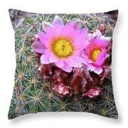 Cactus Flower  Throw Pillow by Alan Johnson