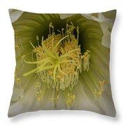 Cactus Flower Macro Throw Pillow