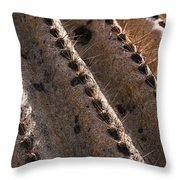 Cactus Spines Throw Pillow