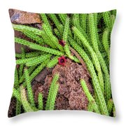 Cactus Splendor Throw Pillow